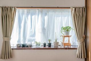 出窓の植物とカメラの写真・画像素材[2723547]