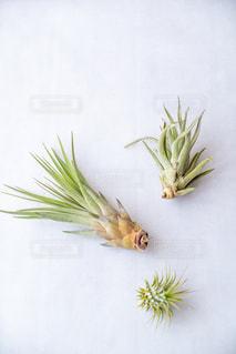 植物の写真・画像素材[2725628]
