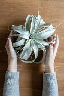 花を持つ手の写真・画像素材[2887811]