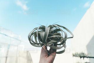 植物を持つ人の写真・画像素材[2887809]
