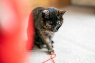 猫,動物,赤,かわいい,黒,毛糸,ペット,子猫,人物,癒し,イベント,遊び,黒猫,クロネコ,ネコ,猫の日,保護猫,保護ネコ,保護ねこ,222,ネコ科の動物,2月22日