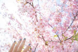 花とくすみブルーのネイルの写真・画像素材[3033609]