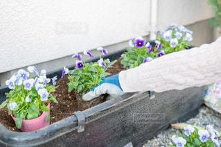 花園のクローズアップの写真・画像素材[3033736]