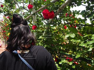 花,屋外,花束,後ろ姿,バラ,景色,花びら,鮮やか,草,薔薇,カラー,草木,フォトジェニック,ブルーム,インスタ映え,かなり,フローラ