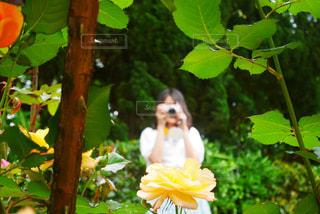 花,屋外,ピンク,花束,後ろ姿,バラ,景色,花びら,鮮やか,薔薇,カラー,草木,フォトジェニック,ブルーム,インスタ映え,かなり,フローラ