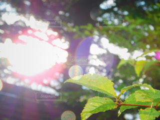 自然,公園,雨,植物,綺麗,水,葉っぱ,水滴,青葉,葉,光,神秘的,雨上がり,雫,天気,雰囲気,マクロ撮影,天気雨,近接撮影