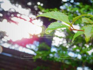 青葉と雨の写真・画像素材[2131048]