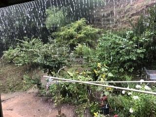 夏の雨の写真・画像素材[2124622]