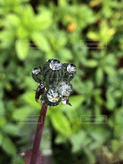 水玉の花の写真・画像素材[2149674]