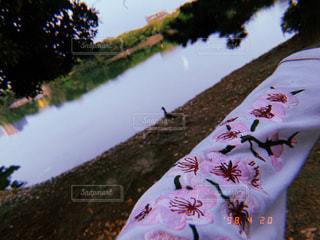 桜,ピンク,鴨,大濠公園