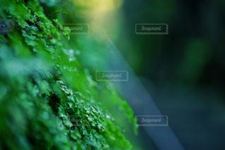 雨と光の写真・画像素材[2171799]