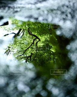 水溜りの中の新緑の写真・画像素材[2210922]