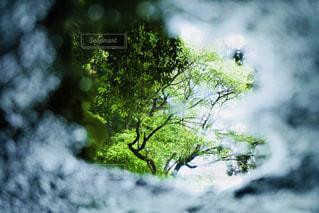覗くと新緑の写真・画像素材[2210948]