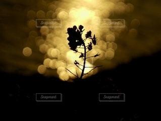 夕日と玉ぼけの写真・画像素材[2781642]
