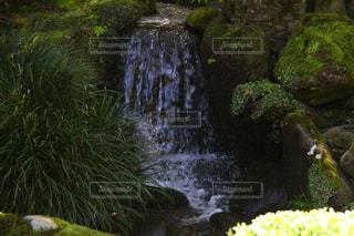 自然,夏,水,水滴,川,水面,滝,草,水玉,石川県,雫,しずく,兼六園,草木