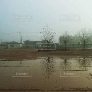 空,雨,屋外,水たまり,水面,霧,樹木,地面,水鏡,校庭,日中,プラタナス
