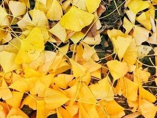 落ち葉の写真・画像素材[2624976]