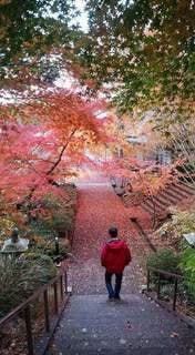 紅葉の神社の階段を下りる男性の写真・画像素材[2754404]
