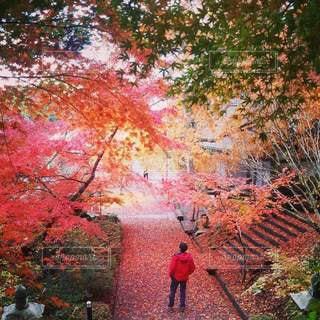 紅葉の盛りの神社の階段の写真・画像素材[2754403]