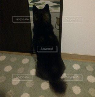1人,犬,動物,後ろ姿,黒,いぬ,背中,後姿,座る,愛,柴犬,1匹,見つめる,黒柴,柴,イヌ,わくわく,そわそわ,お出迎え,帰宅待ち
