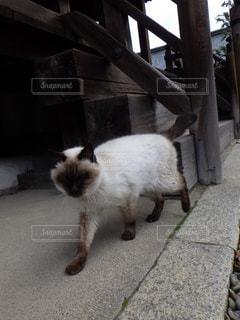 猫,動物,屋外,神社,歩く,地面,ネコ,闊歩