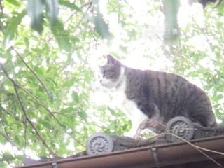 猫,動物,木,屋外,緑,神社,葉,樹木,黄緑,ネコ