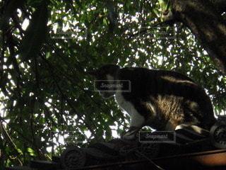 猫,動物,木,屋外,葉,樹木,見下ろす,ネコ