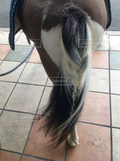 たたずむ馬の後ろ姿の写真・画像素材[2142432]