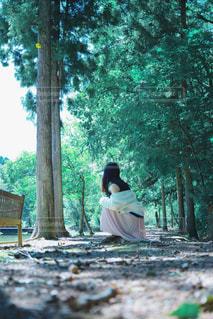 森の中での写真・画像素材[2269181]