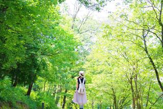 緑の散歩道の写真・画像素材[2273759]