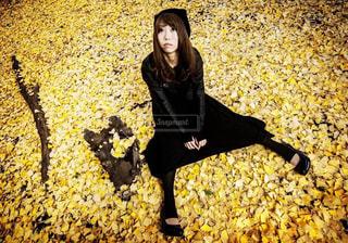 紅葉の絨毯の写真・画像素材[2514376]