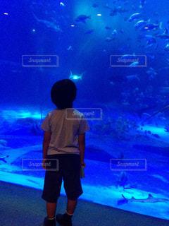 家族,海,魚,かわいい,後ろ姿,水族館,水面,背中,癒し,ブルー,サメ,男の子,息子,大好き,愛しい