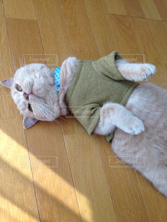 やる気が出ない猫の写真・画像素材[2132206]