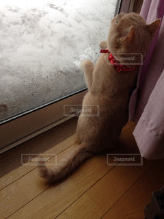 初めてみる雪に興味津々な猫の写真・画像素材[2138262]