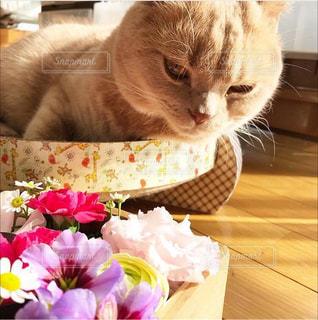 花のある暮らしの写真・画像素材[2140645]