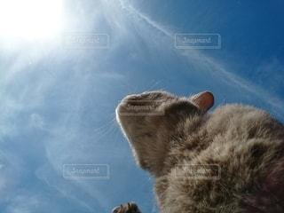 猫が空中に飛び込むの写真・画像素材[2136775]
