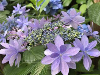 植物の上の紫色の花の写真・画像素材[3376110]