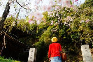 風景,花,桜,屋外,後ろ姿,サクラ,人物,背中,人,後姿,草木