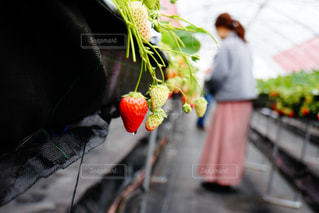 食べ物,屋外,後ろ姿,水,果物,野菜,人物,背中,人,後姿,ベリー