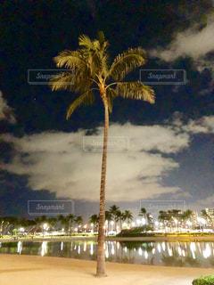 海,屋外,水辺,光,旅行,ヤシの木,フィルム,フィルム写真,フィルムフォト