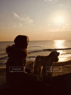 女性,犬,空,屋外,雲,夕焼け,海辺,フィルム,フィルム写真,フィルムフォト