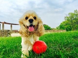 赤いフリスビーを持つ犬の写真・画像素材[2724338]
