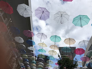 傘,屋外,樹木,カラー,草木