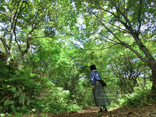 女性,1人,風景,森林,木,屋外,後ろ姿,樹木,人物,背中,人,後姿,ハイキング,ジャングル,草木