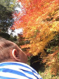 紅葉,子供,後ろ