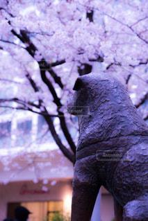 No.410071 春