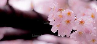春の写真・画像素材[410079]