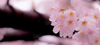 春 - No.410079