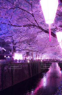 春の写真・画像素材[410087]