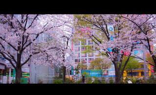 春 - No.410095